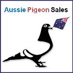 Aussie Pigeon Sales